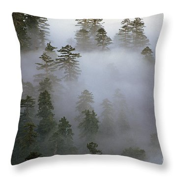 Redwood Creek Overlook With Giant Redwoods  Throw Pillow