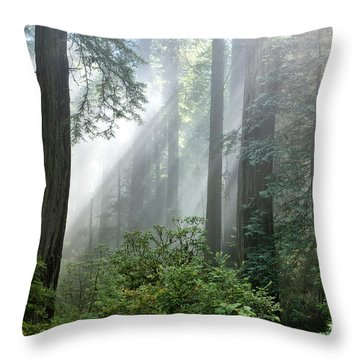 Redwood Forest With Sunbeams Throw Pillow by Inga Spence