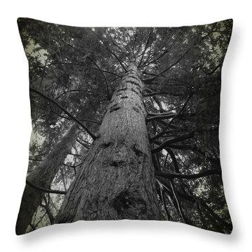 Redwood Tree Throw Pillow