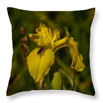 Reed-mace June 2013 Throw Pillow by Leif Sohlman