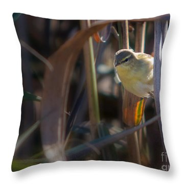 Reed Warbler Throw Pillow