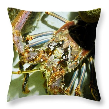 Throw Pillow featuring the photograph Reef Lobster Close Up Spotlight by Amy McDaniel