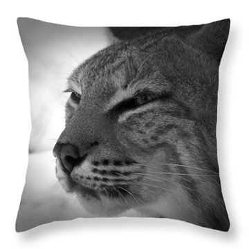 Reflecting Bobcat... Throw Pillow by Christena Stephens