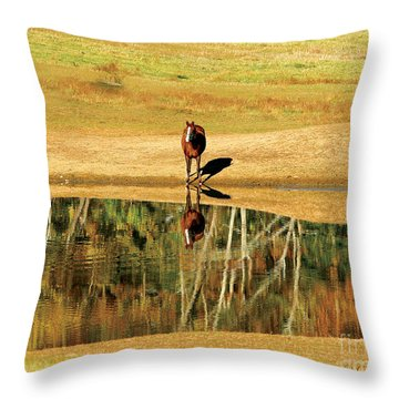 Reflection Throw Pillow by Carol Lynn Coronios