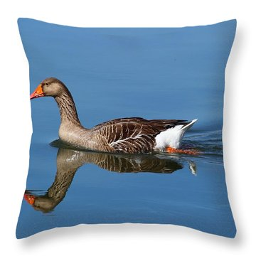 Throw Pillow featuring the photograph Reflection by Lynn Hopwood