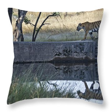 Reflection Of A Tiger Throw Pillow
