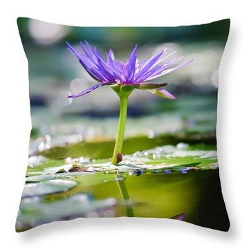 Reflection Of Life Throw Pillow by Charles Dobbs
