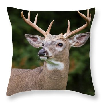 Regal Pose Throw Pillow