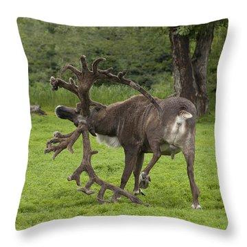Reindeer With A Big Rack Throw Pillow