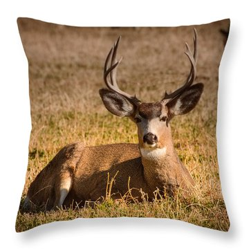 Throw Pillow featuring the photograph Relaxing Buck by Janis Knight