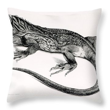 Reptile Throw Pillow by English School