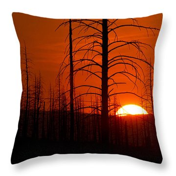 Requiem For A Forest Throw Pillow by Jim Garrison