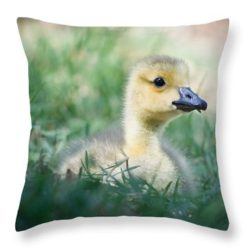 Throw Pillow featuring the photograph Rest by Priya Ghose