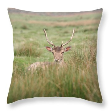 Resting Deer Throw Pillow by Mark Severn