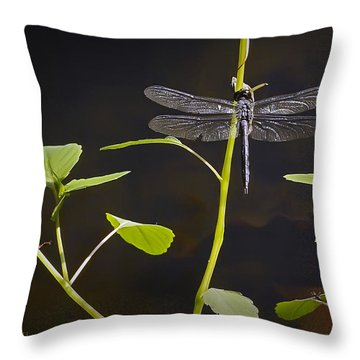 Resting Dragon Throw Pillow by Brian Wallace