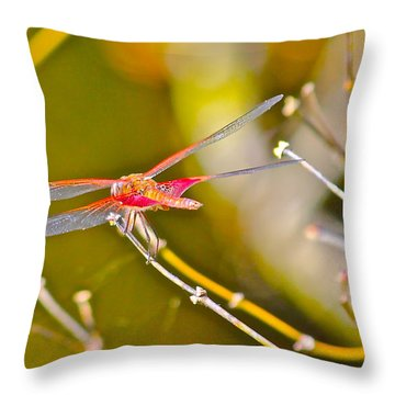 Resting Red Dragonfly Throw Pillow