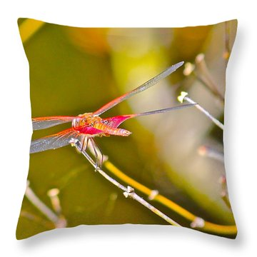 Resting Red Dragonfly Throw Pillow by Cyril Maza