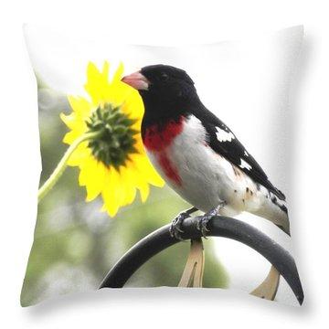 Resting Rose Breasted Grosbeak Throw Pillow by Belinda Lee