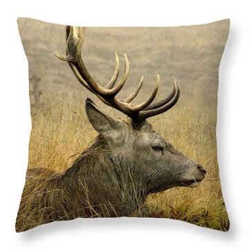 Resting Stag Throw Pillow