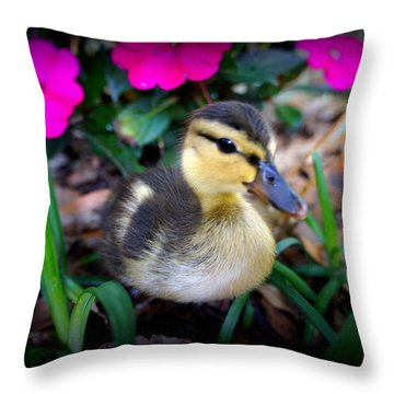 Throw Pillow featuring the photograph Reynolds by Laurie Perry