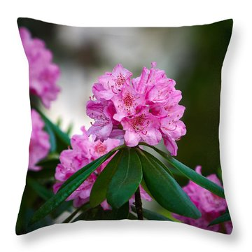 Rhododendron Throw Pillow by Jouko Lehto