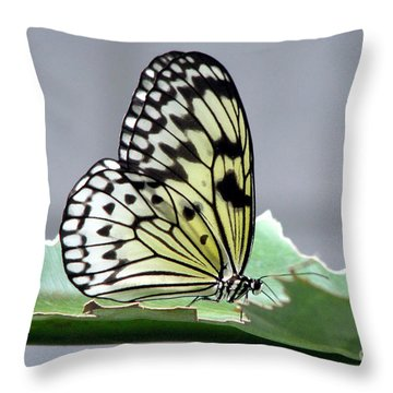 Rice Paper Butterfly On A Leaf Throw Pillow by Inspired Nature Photography Fine Art Photography