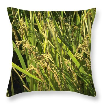 Rice Throw Pillow by Rachel Mirror