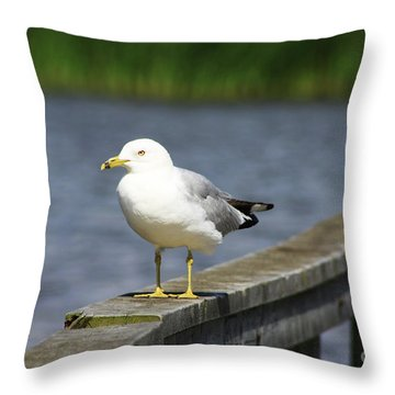 Ring-billed Gull Throw Pillow by Alyce Taylor