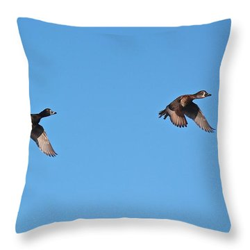 Ring-necked Duck Pair Throw Pillow