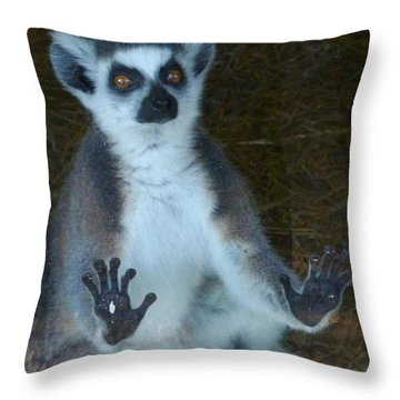 Ring Tailed Lemur -greetings Throw Pillow