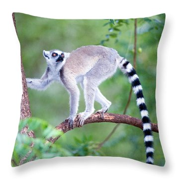 Ring Tailed Lemurs Throw Pillows