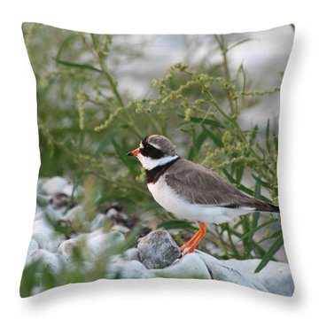 Ringed Plover On Rocky Shore Throw Pillow