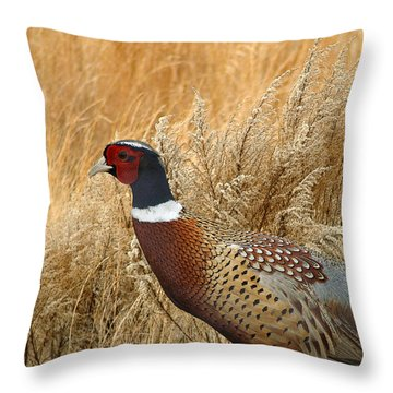 Ringneck Pheasant  Throw Pillow