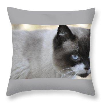 Throw Pillow featuring the photograph Ringtail by Sarah McKoy