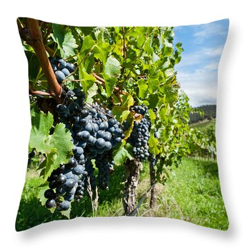 Ripe Grapes Right Before Harvest In The Summer Sun Throw Pillow by Ulrich Schade
