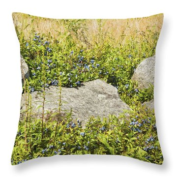 Ripe Maine Low Bush Wild Blueberries Throw Pillow by Keith Webber Jr