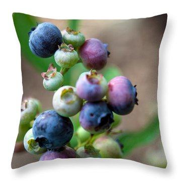 Ripening Blueberries Throw Pillow