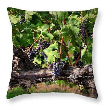 Ripening Grapes Throw Pillow by Carol Groenen