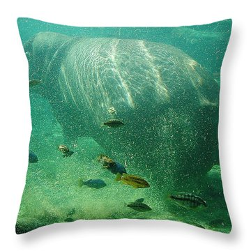 Throw Pillow featuring the photograph River Horse by David Nicholls