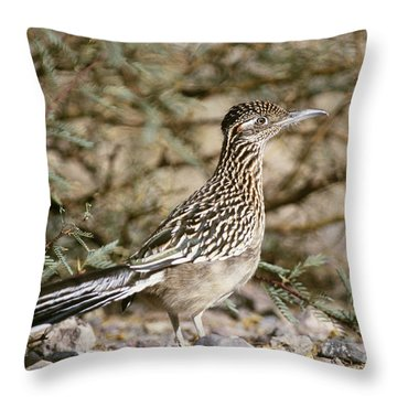 Roadrunner Geococcyx Californianus Throw Pillow