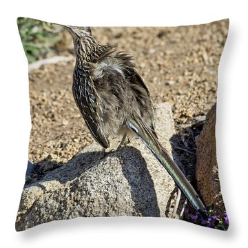 Roadrunner Warming In Sun Throw Pillow
