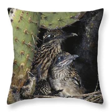 Roadrunners In Nest Throw Pillow