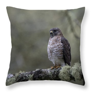 Roadside Hawk On Lichen-covered Branch 1 Throw Pillow