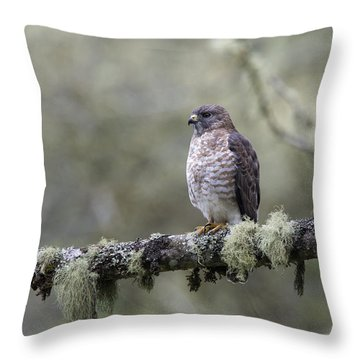 Roadside Hawk Perched On A Lichen-covered Branch 2 Throw Pillow