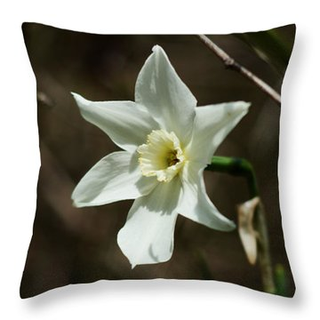 Roadside White Narcissus Throw Pillow by Rebecca Sherman