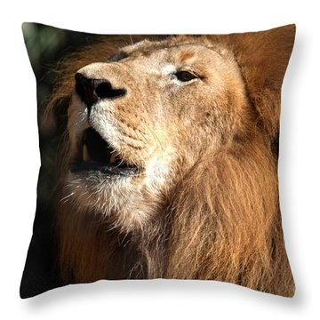 Throw Pillow featuring the photograph Roar - African Lion by Meg Rousher