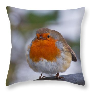 Robin 1 Throw Pillow by Scott Carruthers