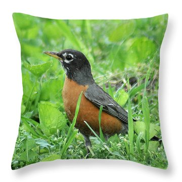 Robin 370 Throw Pillow