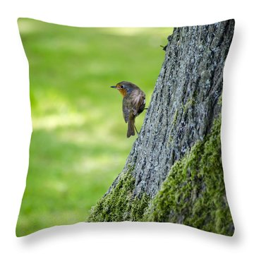 Robin At Rest Throw Pillow