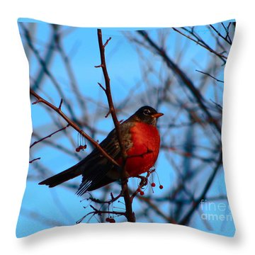 Throw Pillow featuring the photograph Robin by Gena Weiser